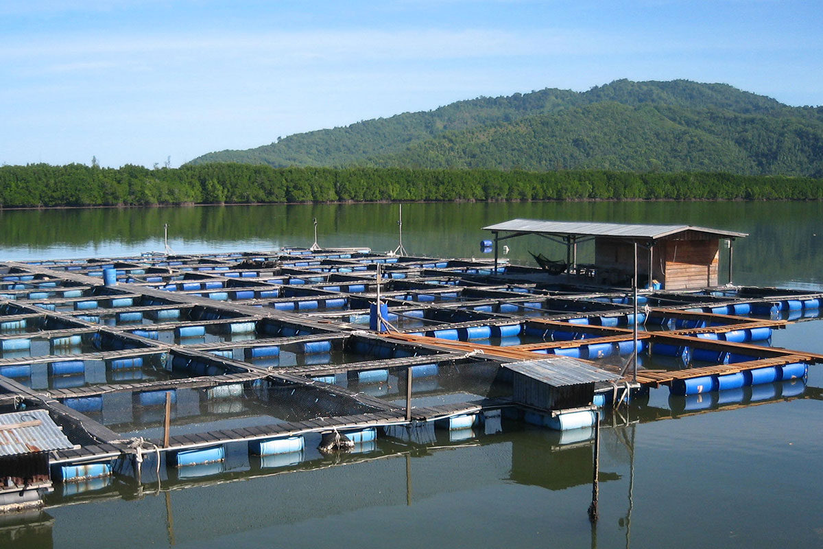 Bayu Aquaculture fish farm