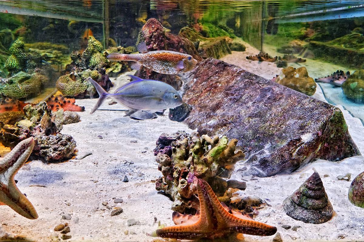 Fishes and other marine life in MERC aquarium