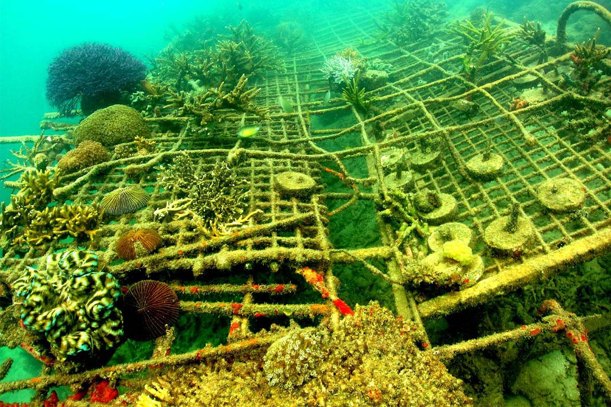 MERC marine life restoration